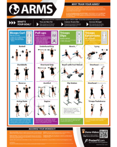 Gym Exercise Poster - Arm Training (with free demonstration videos)